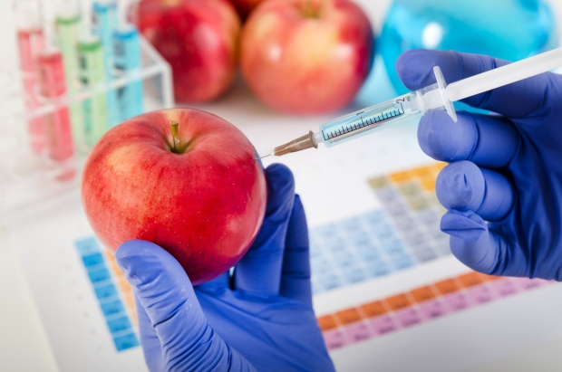 Analyst injects liquid into apple. Genetically modified food concept